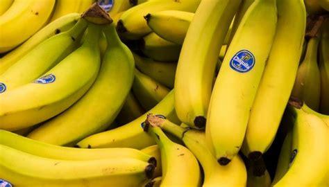 Un hongo pone en jaque la banana Cavendish   Canal Veo