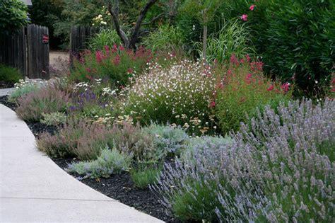 ¿Un jardín a pleno sol? 8 plantas que te interesa conocer