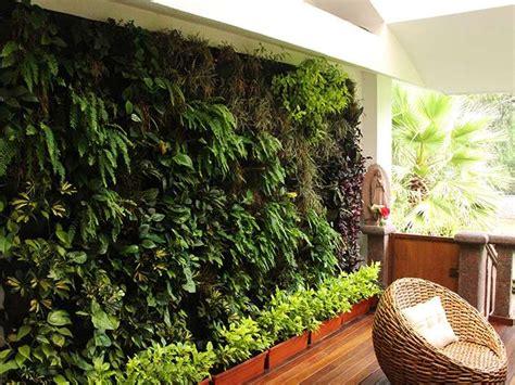 Un muro verde natural para tu hogar   Muros y Azoteas Verdes