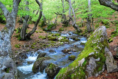 Un paraíso en la Montaña Central Leonesa: El canto de los ...