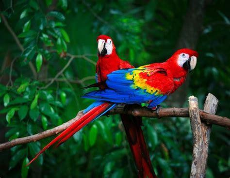 Un repaso por los pájaros exóticos más comunes en los ...