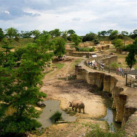 Un Sanctuaire des Okapis au Zoo de Doué la Fontaine | Val ...