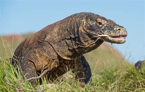 Un tercio de los animales nacionales está en peligro de ...
