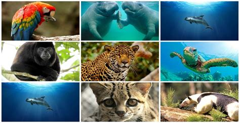 Una brutal realidad en México para muchas especies es el ...