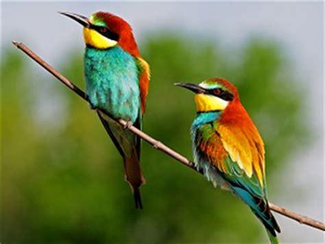 Una cuarta parte de las aves españolas está en peligro