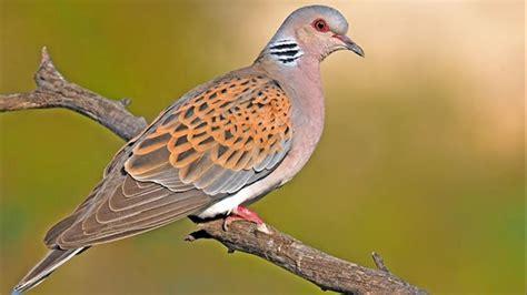 Una de cada ocho especies de aves está en riesgo de extinción