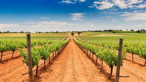 Una hectárea de viñedo de secano en Castilla La Mancha se ...