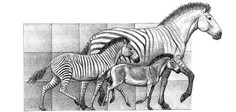 Una nueva teoría sobre la evolución del caballo