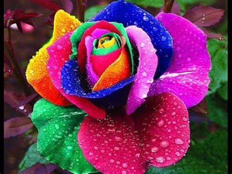 UNBOXING ALIEXPRESS   Sementes de rosas pétalas coloridas ...