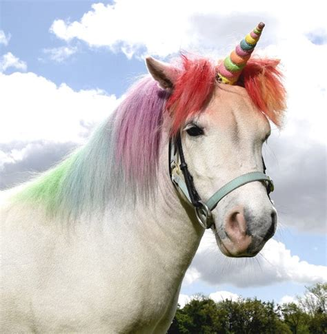 Unicorn Land where you can meet  real life unicorns  is ...