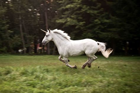 unicorn real – Better Being 940
