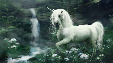 Unicornios De Verdad   SEONegativo.com