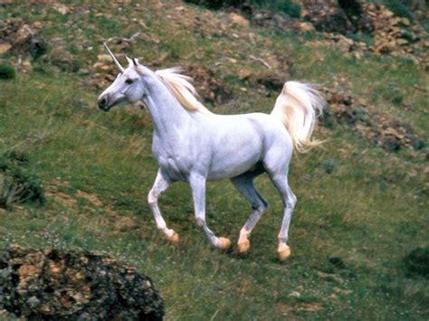 Unicornios Reales Encontrados   Deunicornios.online