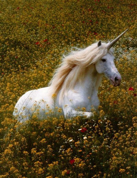 Unicorns and branding