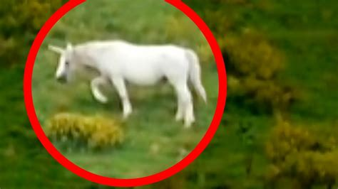 Unicorns Caught on Tape  BEST UNICORN SIGHTINGS    YouTube