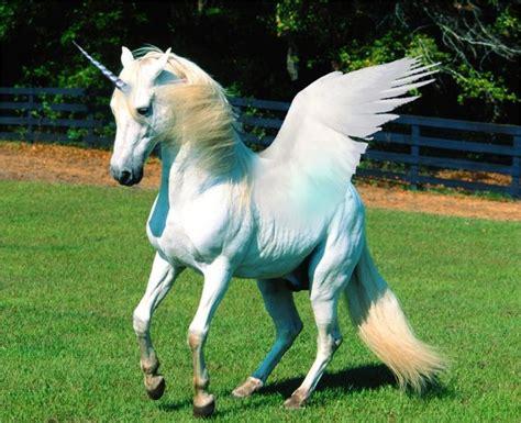 Unicorns: History, Magic, Myth and Symbolism : In5D