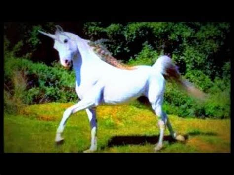 Unicorns Sightings in Kansas – Trumped Progressives