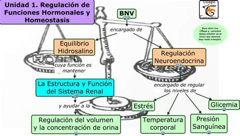 UNIDAD 1 REGULACIÓN DE FUNCIONES HORMONALES Y HOMEOSTASIS