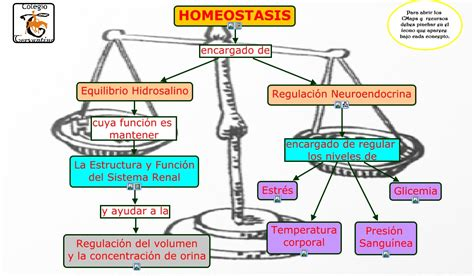 UNIDAD 2 REGULACIÓN DE FUNCIONES HORMONALES Y HOMEOSTASIS