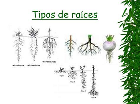 UNIDAD 4 Las plantas.   ppt video online descargar