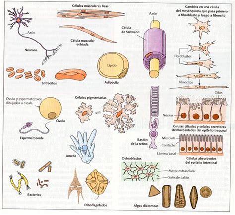 UNIDAD I. CONT. 2.  LA CÉLULA  | BIOLOGÍA ¡EXPERIMENTEMOS!