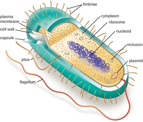 Unique Characteristics of Prokaryotic Cells | Microbiology