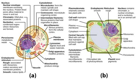 Unique Features of Animal and Plant Cells | Biology for ...