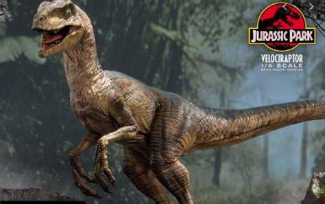 Unlike  Jurassic Park  movie, real Velociraptors did not ...