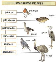 Untitled Document [cplosangeles.educarex.es]