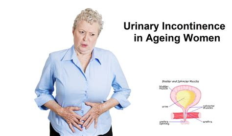 Urinary Incontinence in Older Women | My Gynae