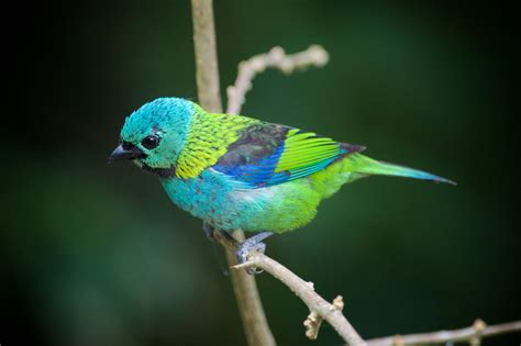 Uruguay in Photos | Green headed tanager