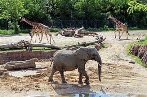 Uruguay Zoos | Blog | Real Estate in Uruguay