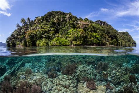 Use Your Scuba Skills to Help Coral Reefs