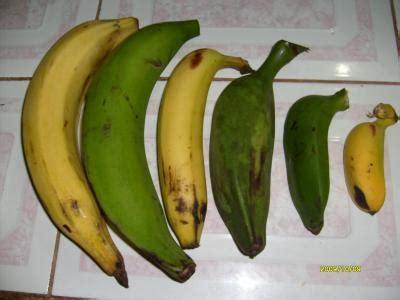 uso de palabras    Plátano  and  banana , geographical ...