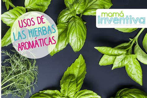 Usos de las Hierbas Aromáticas para Cocinar | Hierbas ...