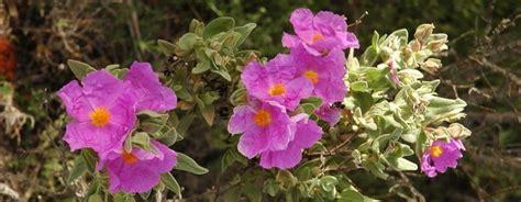 Utiliza flora del Mediterráneo para darle color al jardín