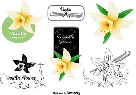 Vanilla Flower Vectors Set   Download Free Vectors ...