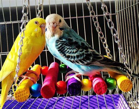 Variedad de casa y accesorios para pájaros si tienes uno ...