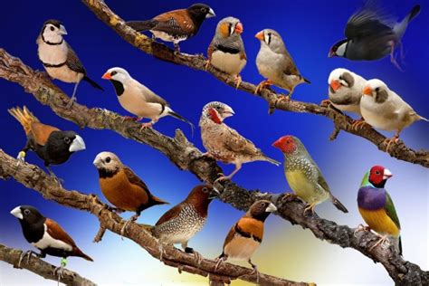 Variedad de pájaros posados en las ramas  43564
