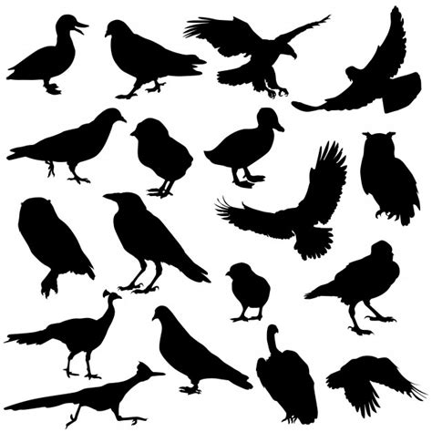 Vector de silueta de animales de aves   Vector Premium