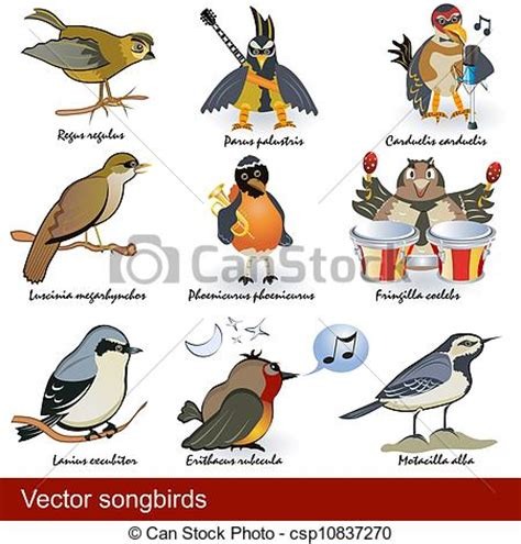 Vector songbirds. Collection of different songbirds, some ...