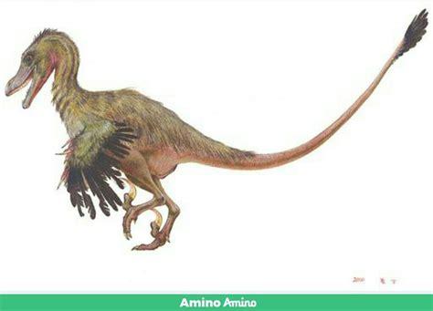 Velociraptor           [[[[[ | Amino Paleontología Amino