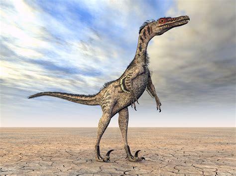 Velociraptor: Características, Curiosidades e Fotos ...