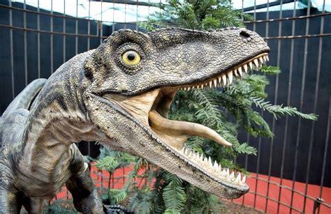 Velociraptor   Características, hábitat, alimentación ...