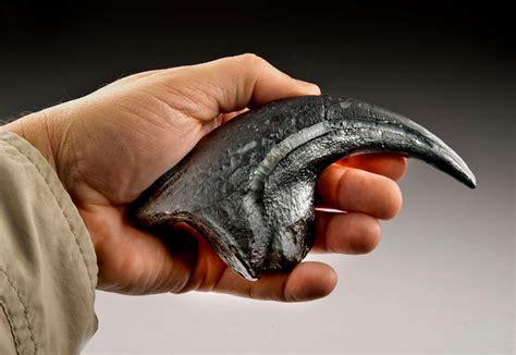 Velociraptor: com era fatto davvero?   Focus Junior