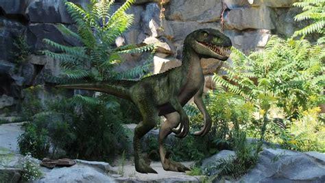 Velociraptor definition/meaning