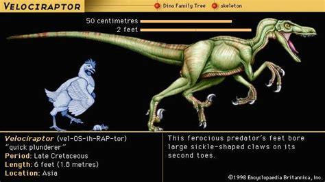 Velociraptor   dinosaur   Britannica.com