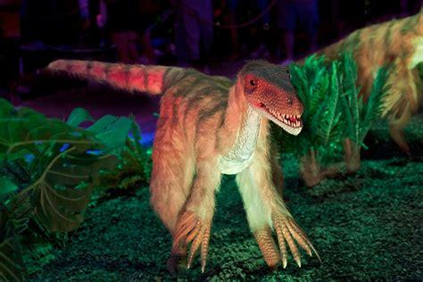 Velociraptor Dinosaur Desktop Wallpaper