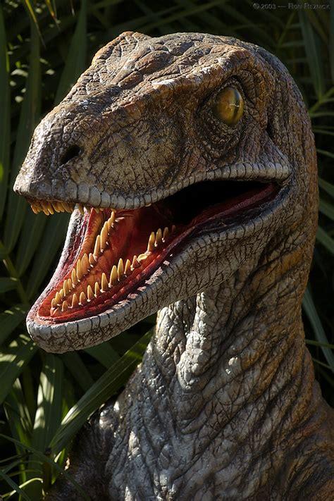 Velociraptor Dinosaur, photos | information   Velociraptor ...