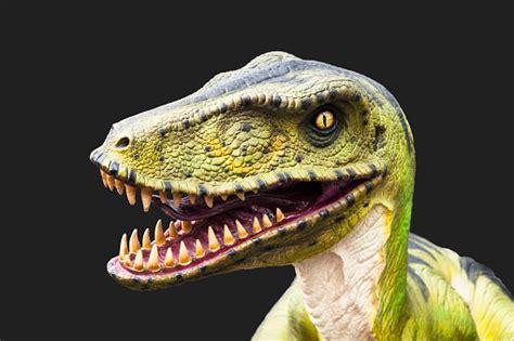 Velociraptor Dinosaur Stock Photo   Download Image Now ...